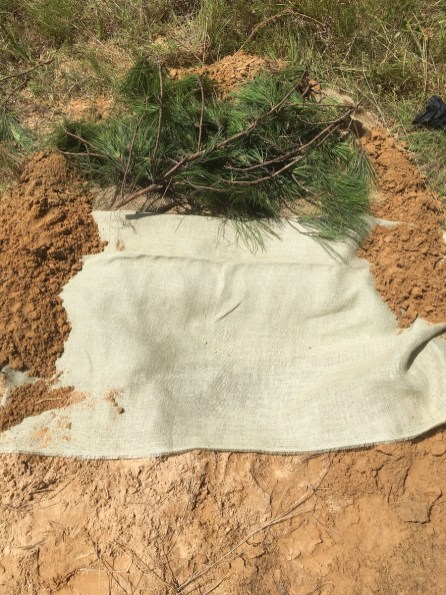 A gopher tortoise burrow is marked for protection. (Alabama Power Company)