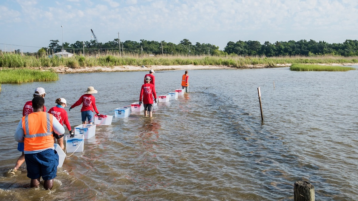 Mobile Bay reefs project aims to help renew aquatic habitats, vanishing shoreline