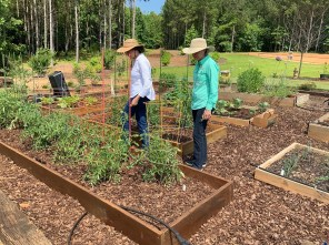 Debbie Murphy, a Master Gardeners volunteer and mentor with Harvest for Health, and Kerry Smith, state Master Gardeners program coordinator for Alabama Extension, examine a garden. (Auburn University)