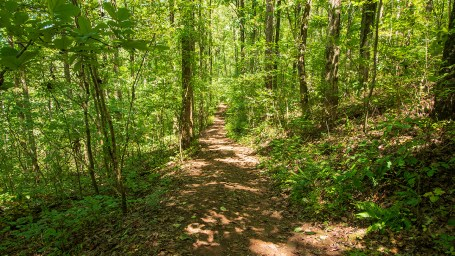 More than 14 miles of hiking trails are available at Ruffner Mountain. (Dennis Washington / Alabama NewsCenter)