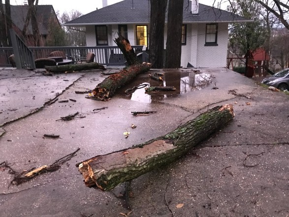 This fallen tree in Birmingham's Forest Park neighborhood is among the damage caused by Saturday's storms. (Michael Sznajderman / Alabama NewsCenter)