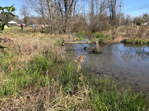 Glenn Springs, south of Bessemer, is one of five known spots in Jefferson County -- and the world -- that are home to the tiny, colorful watercress darter. (Michael Sznajderman/Alabama NewsCenter)