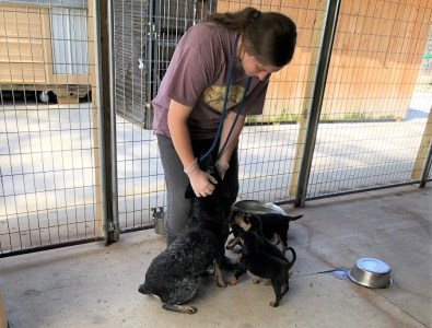 Crossing Paths Animal Rescue Center remains open during the COVID-19 crisis. Adoptions can be completed online and dogs can be delivered straight to their new owners' cars. (Crossing Paths)