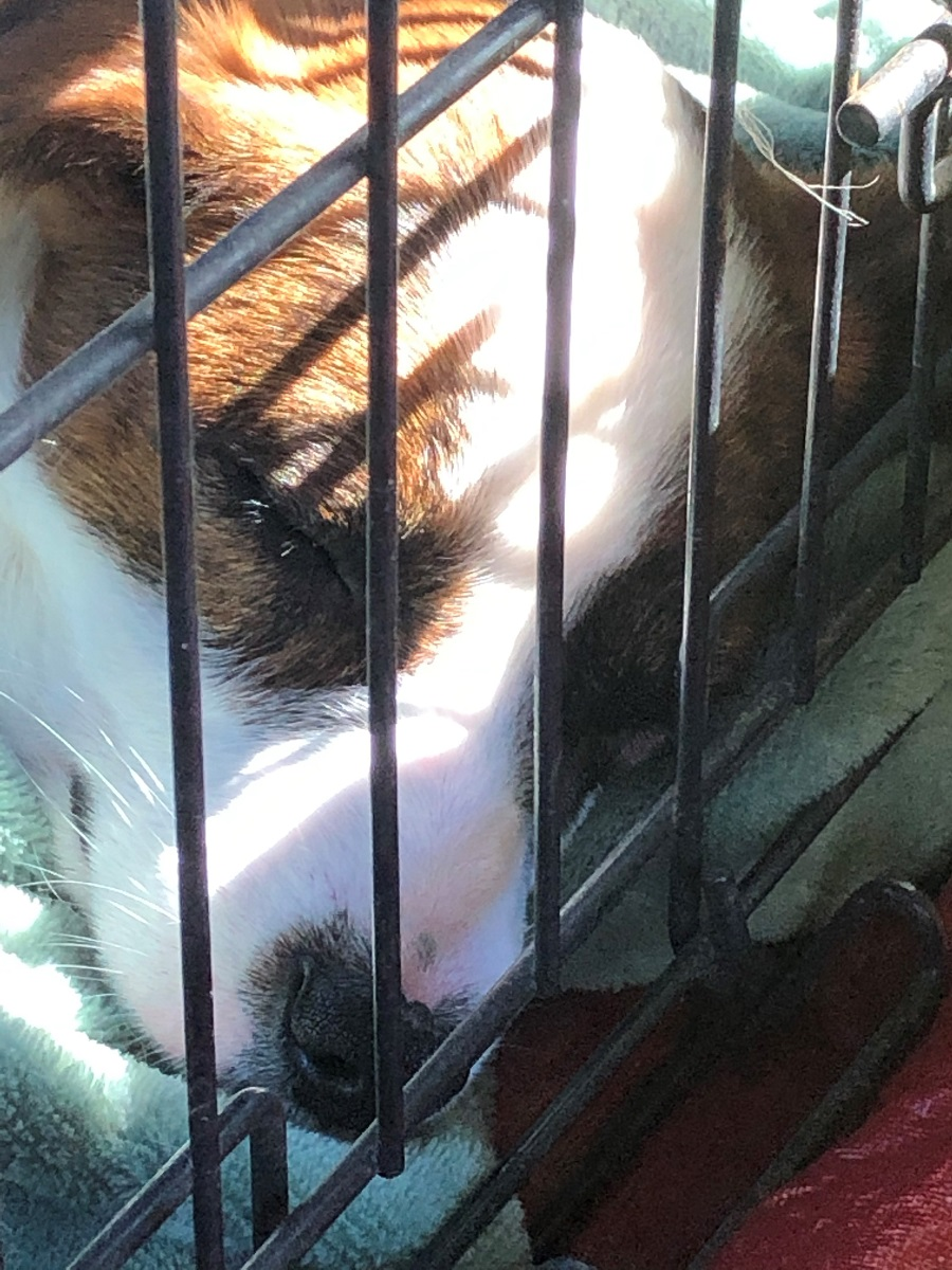 Alabama Animal Shelters Still On The Job Meeting Pets Needs In Midst Of Covid 19 Pandemic Alabama Newscenter