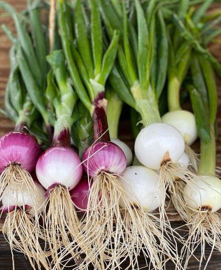 Sugar Hill U-Pick Farms sells two purple onions for $1. (Scott Penton)