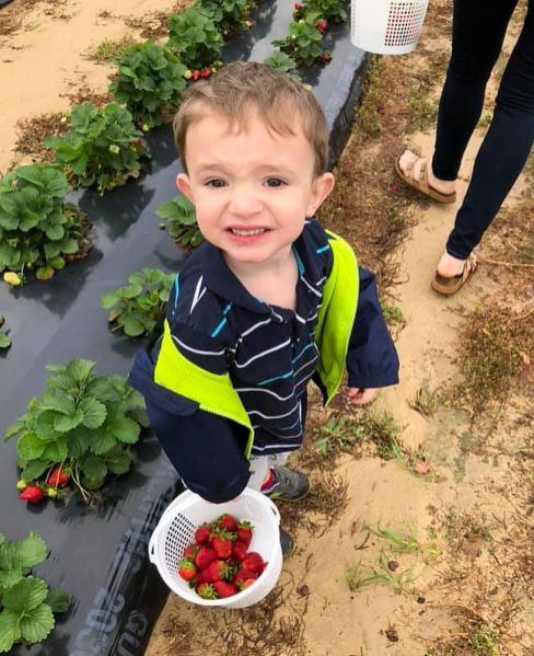 Children enjoy a day out with the family picking berries. (contributed)