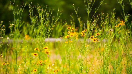 Alabama Power maintains five pollinator-friendly plots at its recreation sites. (Dennis Washington / Alabama NewsCenter)
