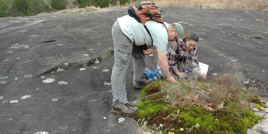 Members of a survey team work to identify all of the diverse flora at Flat Rock Park. They counted 365 species, some of them rare. (Briggs Armstrong)