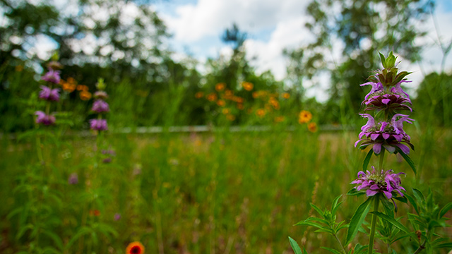 Alabama Power encouraging healthy habitats through pollinator plots