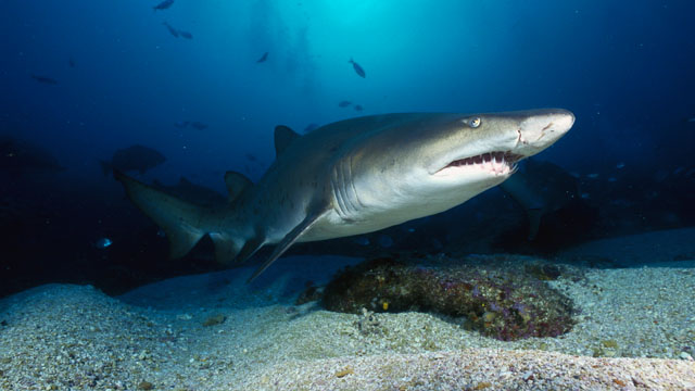 Birmingham's McWane Science Center announces two new fossil shark discoveries