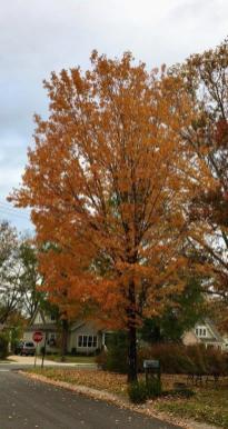 Alabama's fall colors can often be enjoyed right outside your door. (Bob Blalock / Alabama NewsCenter)