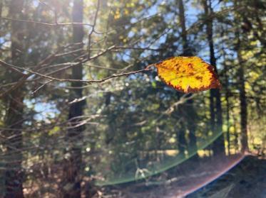 Fall colors radiate in Alabama. (Alesha Jefferies)