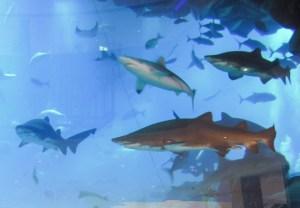 Dubai akvárium