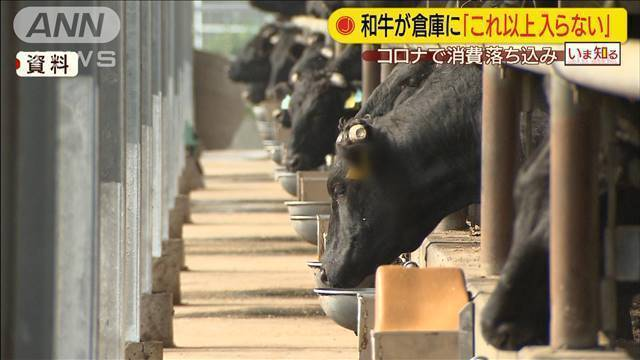 真🌸保守速報!江藤農水相「和牛の在庫が倉庫にこれ以上入らない。」