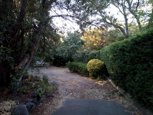 El jardín-bosque de mi albergue