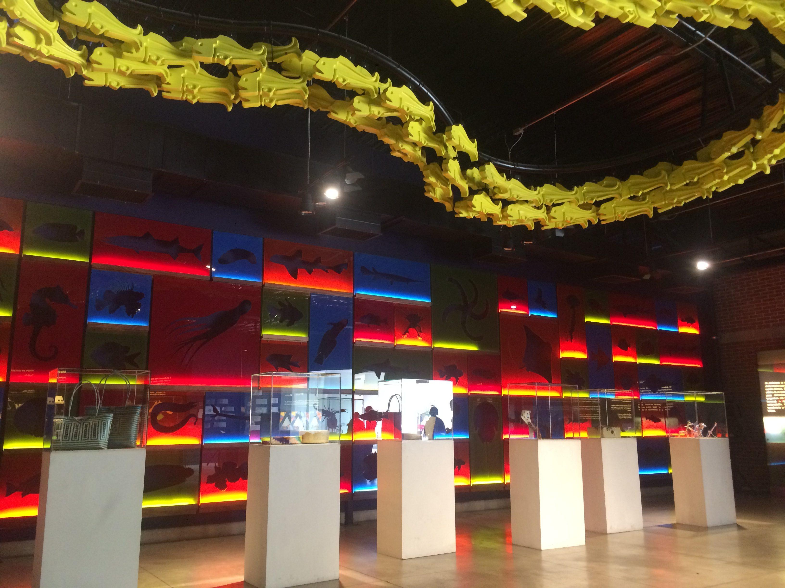 Acuario Michin Guadalajara y la Comisión Estatal Indígena inauguran exposición de Arte Mixteco.