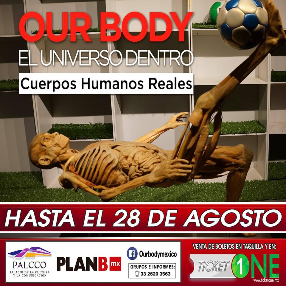 Our Body El universo dentro / PALCCO