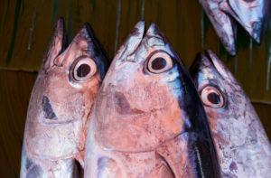 Ambon,Indonésie,Moluques,marché,poisson