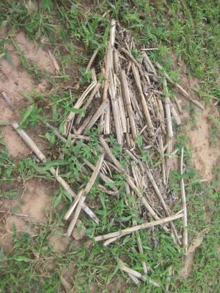 ATMA Farm - leaving the crops as manure