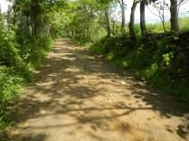 Camino a Río Indio