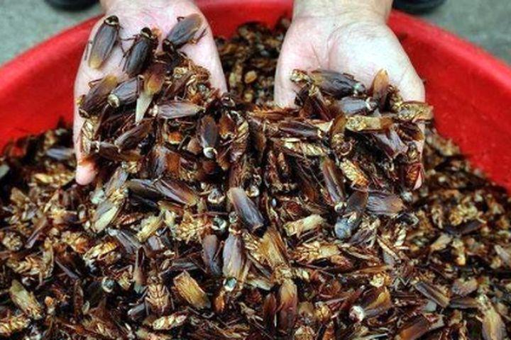 Кытай кадимки эле «таракан» фабрикасын ачса, Казакстанда сатылууда…
