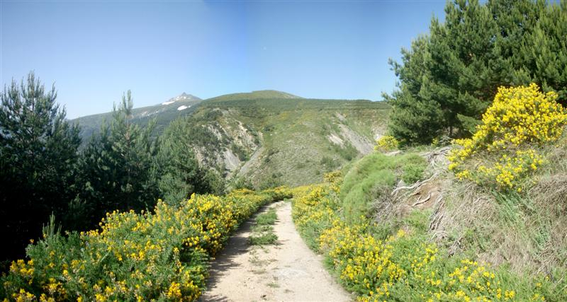 Panorama 12 (Medium)