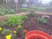 Herbs and bindweed