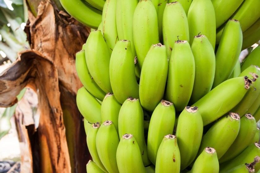 الموز الأخضر