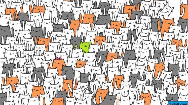 لغز الارنب هل بإمكانك العثور على الارنب بين حشد القطط - عالم نوح ...