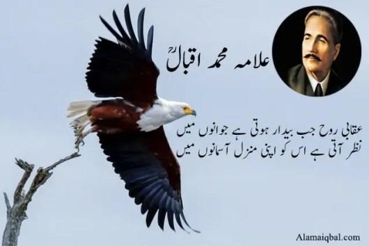 Allama iqbal ka shaheen urdu