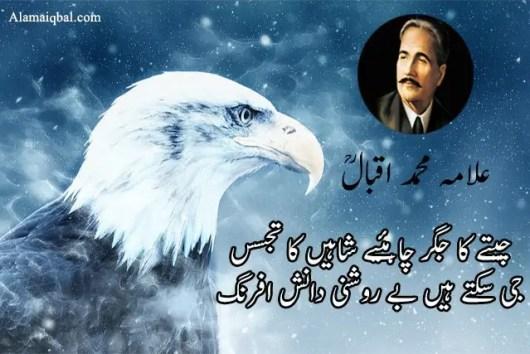 Iqbal tere shaheen funny poetry
