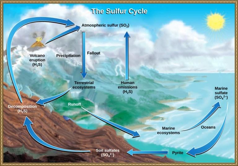 Fungsi-dan-Manfaat-Siklus-Sulfur
