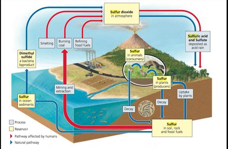 Proses-pada-Siklus-Sulfur