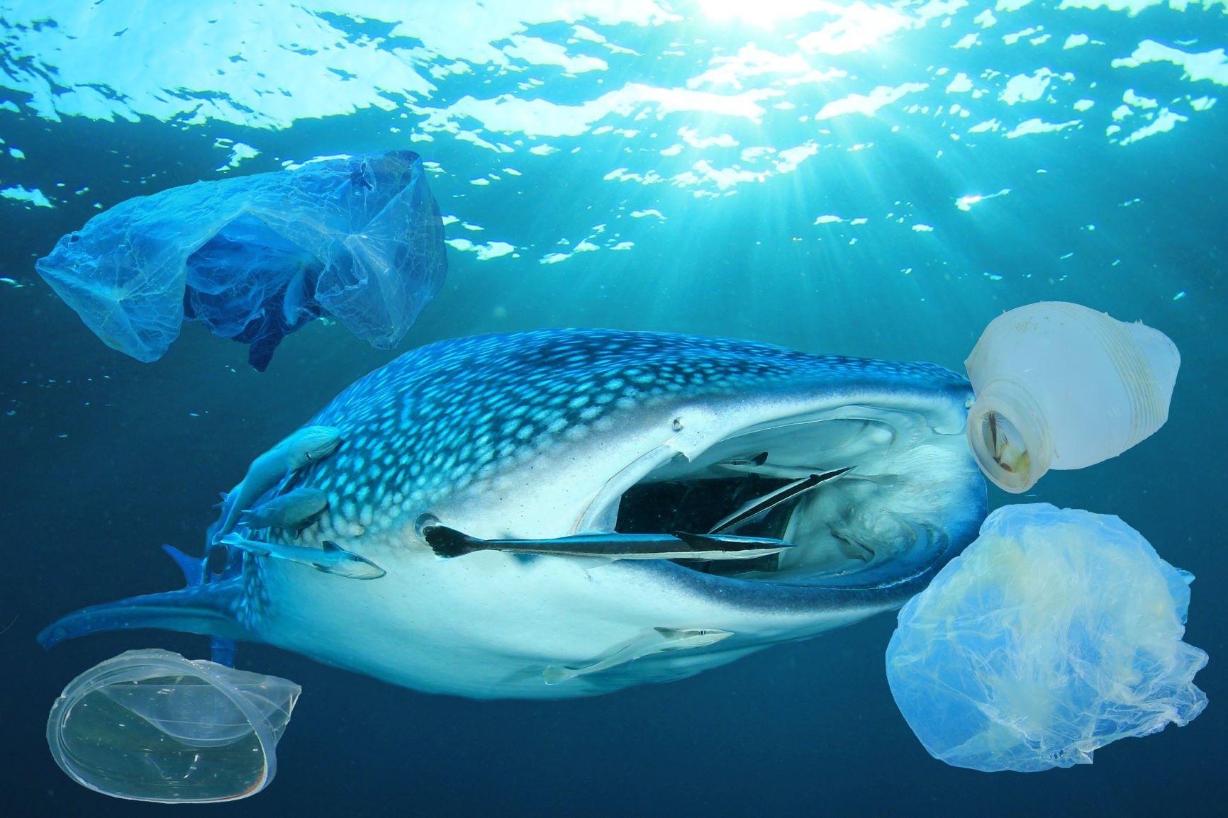 rantai-makanan-di-laut