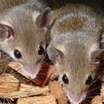 مكافحة الفئران والحشرات داخل المنزل والاستعانة بالمبيدات الحشرية او الشركات المتخصصة فى ذلك