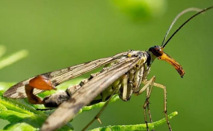 معالجة حشرة العته وما تسببة من مخاطر وامراض