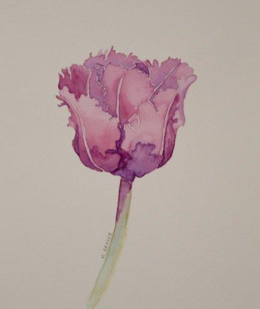 Archer-tulip-640