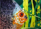 Holt-fish-640