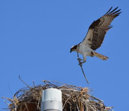 Nest building 5