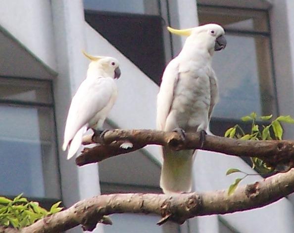 Daftar Hewan Burung Langka dan Terancam Punah