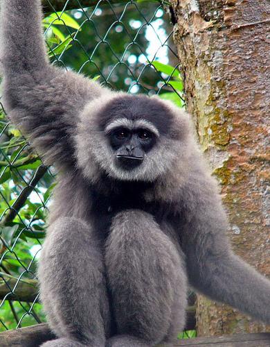 Hewan Mamalia Indonesia dalam Daftar CITES Apendiks I
