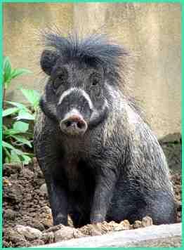Kumpulan Gambar Hewan Herbivora Indonesia  Alamendahs Blog