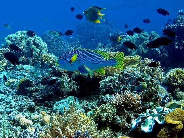 Koleksi Gambar Terumbu Karang Coral Reef  Alamendahs Blog