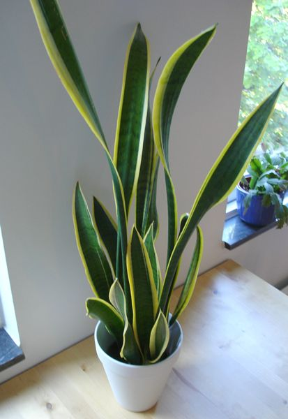 Tumbuhan Hidrofit Beserta Contoh Gambarnya : tumbuhan, hidrofit, beserta, contoh, gambarnya, Indah, Tumbuhan, Xerofit,, Hidrofit, Higrofit