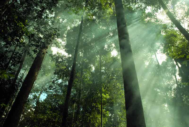 hutanhujantropis5  Alamendahs Blog
