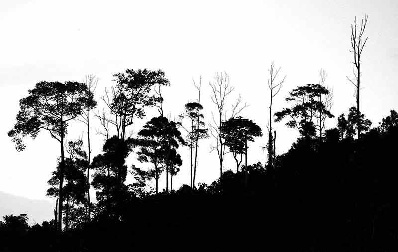 Kumpulan Gambar Hutan Hujan Tropis  Alamendahs Blog