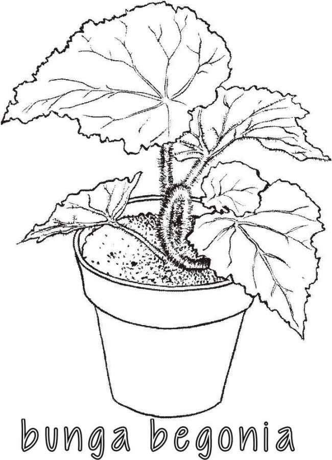 Mewarnai Bunga Begonia Alamendah S Blog Cute766