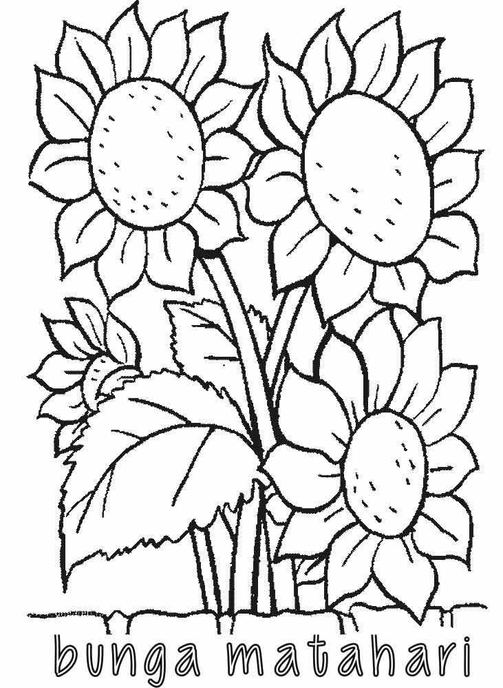 Mewarnai Bunga Matahari  Alamendahs Blog