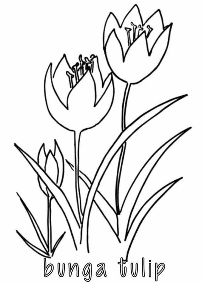 Mewarnai Gambar Rumput : mewarnai, gambar, rumput, Mewarnai, Gambar, Rumput, Sukagambarku