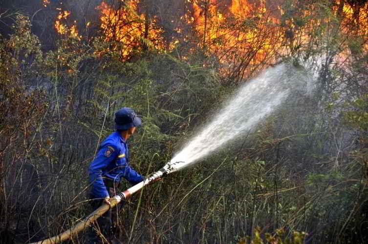 Penyebab Kebakaran Hutan di Indonesia  Alamendahs Blog
